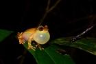 Expedições à Amazônia pelo RIO NEGRO identificam 12 novas espécies de animais e coletam dados de 1,7 mil