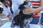 Sábado é dia de vacinação contra a raiva. Veja a lista dos locais onde levar seu pet em Belo Horizonte / MG