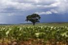 Dia da Árvore: O Brasil tem seis biomas e mais de 60 mil espécies. Desmatamento ainda é alto desafio