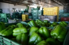 Brasil desperdi?a 41 mil toneladas de alimento por ano, diz entidade