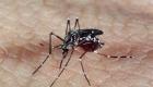 Imunidade adquirida pelo v?rus da dengue pode proteger contra o da zika